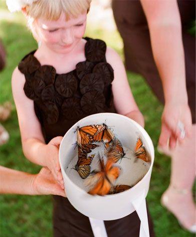 Motyle na ślubie 3