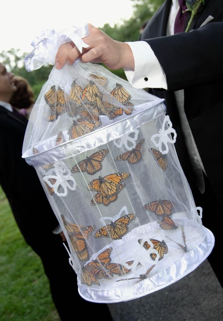 Motyle na ślubie 5