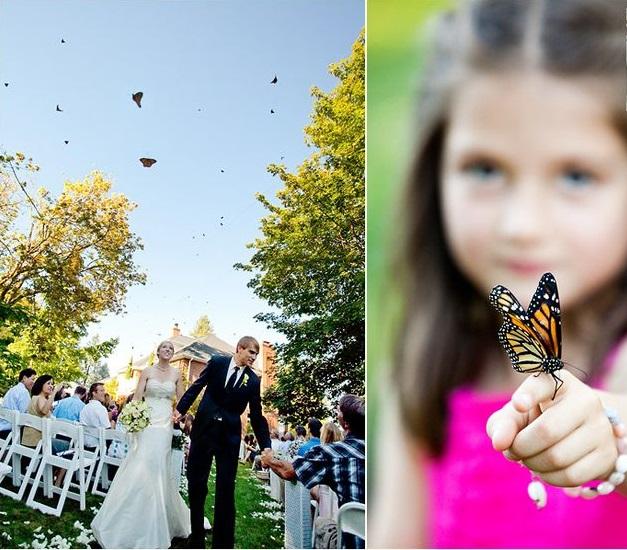 Motyle na ślubie 6
