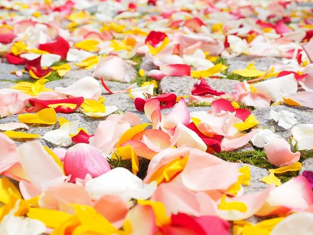 Płatki kwiatów na ślubie (7)
