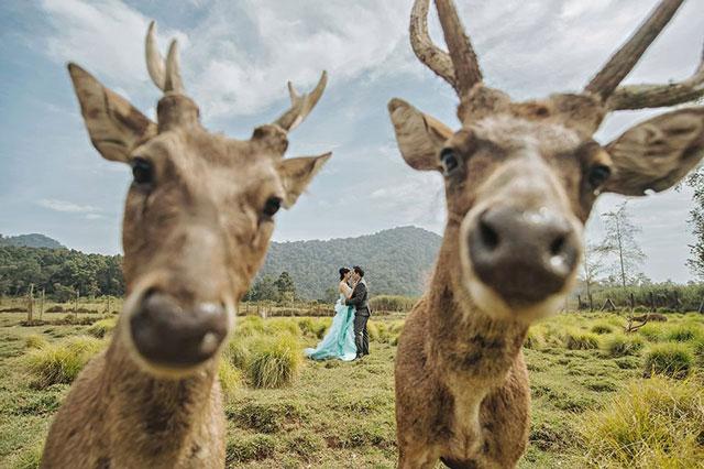 Najlepsze zdjęcia ślubne 2015 (13)