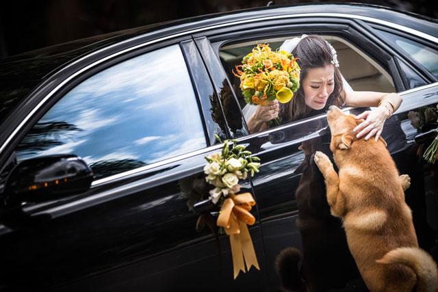 Najlepsze zdjęcia ślubne (8)